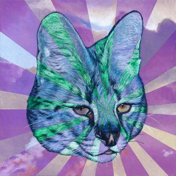Image of Wildcat