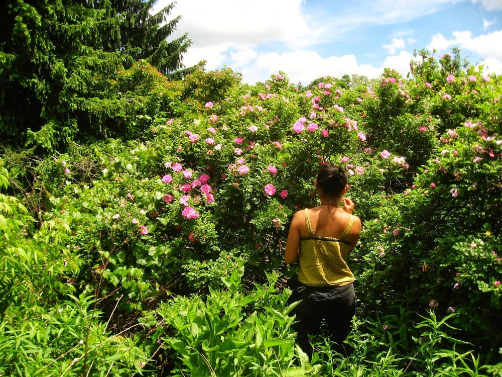 Image of Herbal Teas/ Tinctures