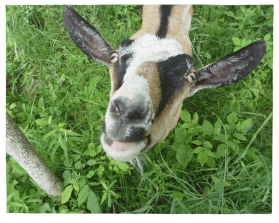 Image of Goat Jig Saw Puzzle