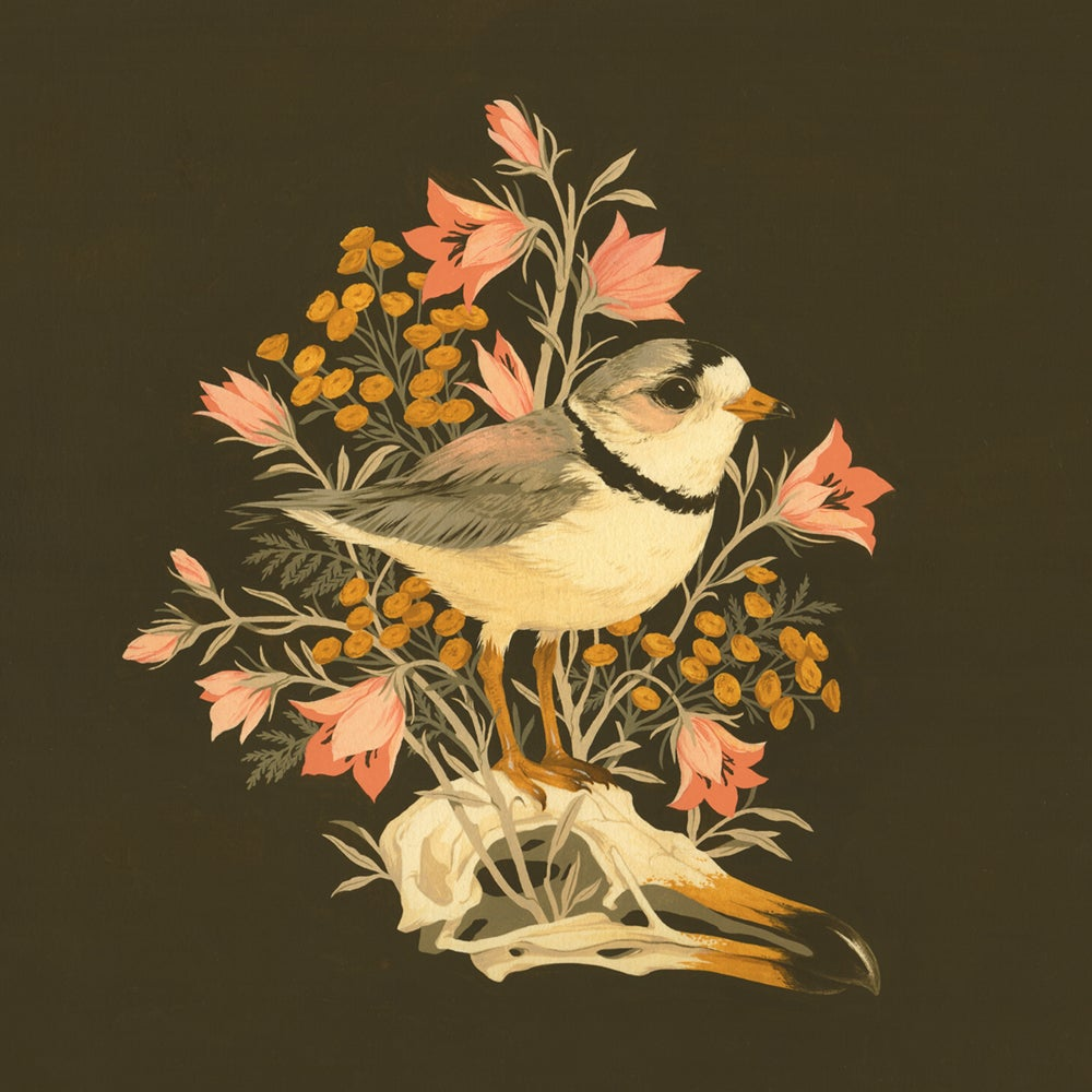 Image of Piping Plover giclée print