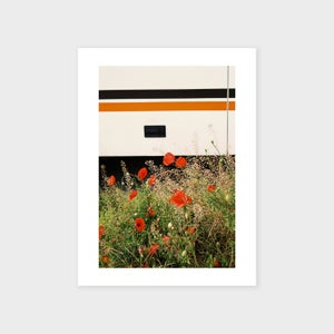Image of Poppies, 2016