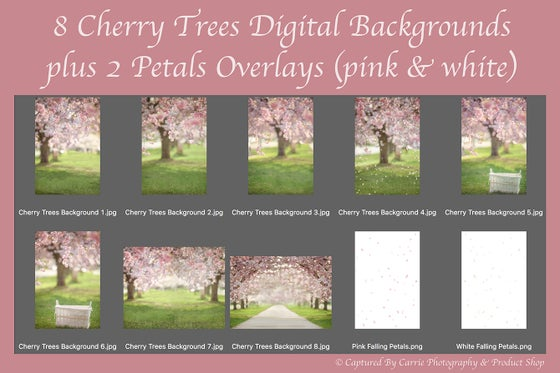 Image of Cherry Trees Digital Backgrounds
