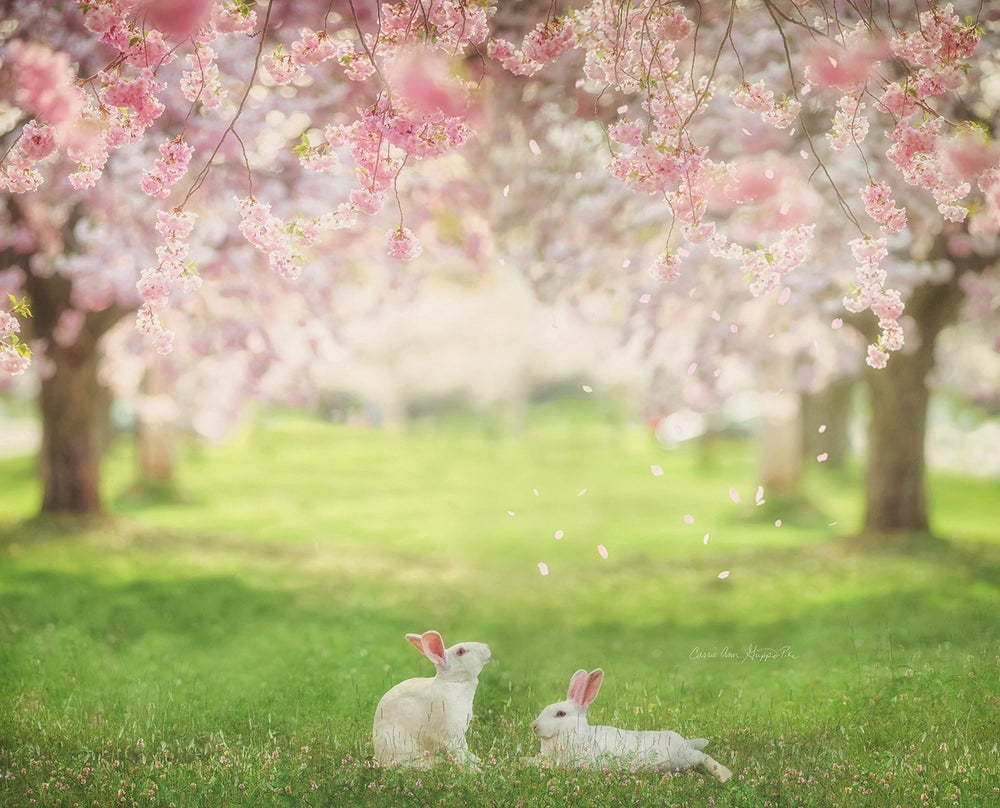 Image of White Bunnies Overlays