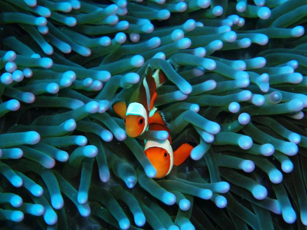 Image of Nemo Fish Full Movie Free Download