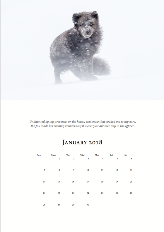 Image of Melrakki 2018 Calendar