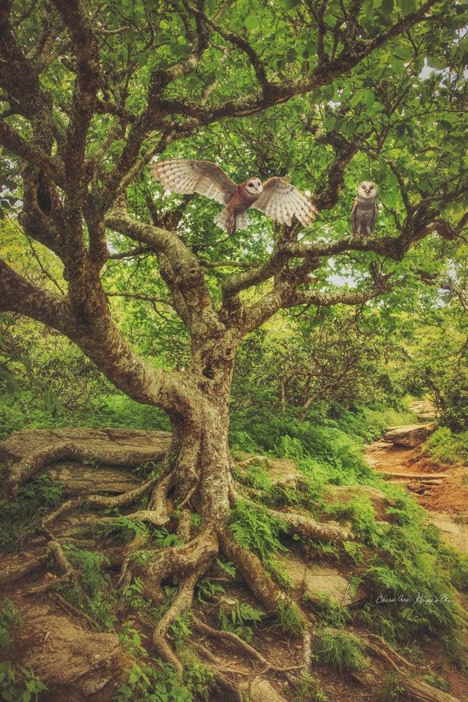 Image of Enchanted Forest Sampler