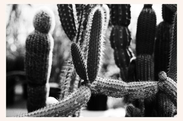 Image of b&w cactus