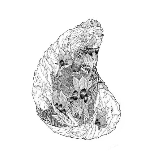 Image of 'Sturt's Desert Pea' A3 Print