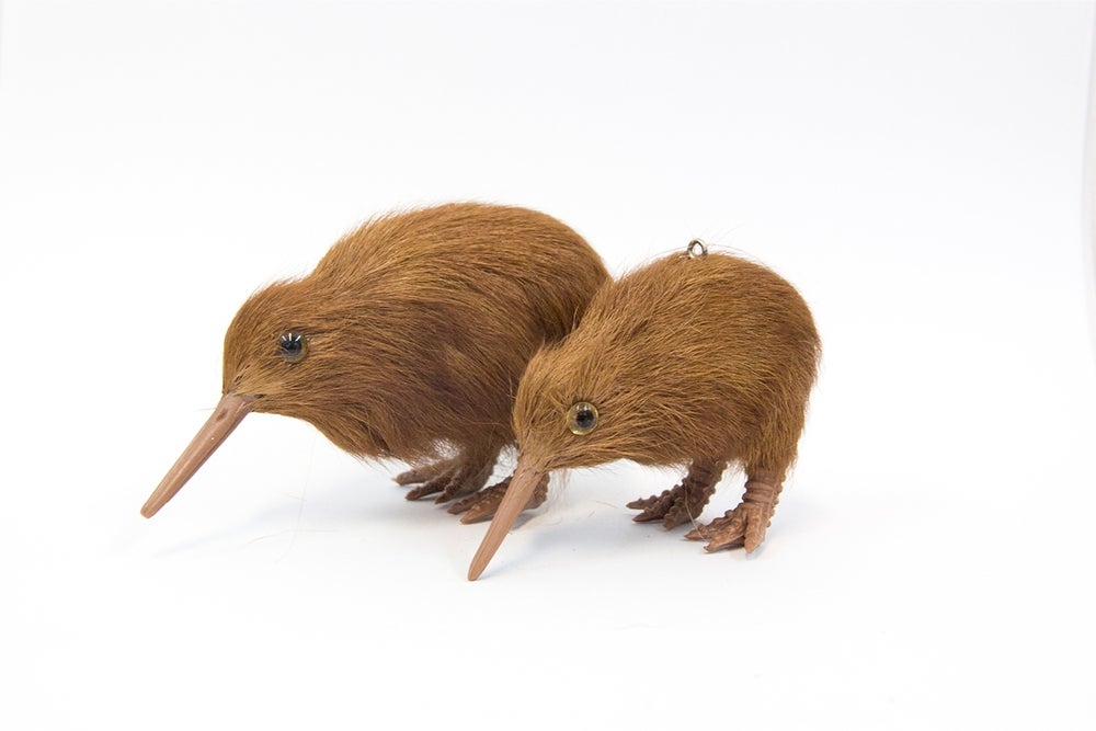 Image of Baby Kiwi pets Medium & Small