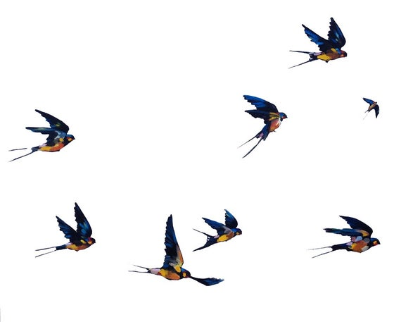 Image of Flying Birds II