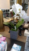 Image of Orchid in Cement Pot