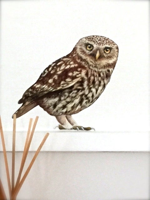 Image of We are back on the 8th of Jan! - Oswald Little Owl ~ Wall decal