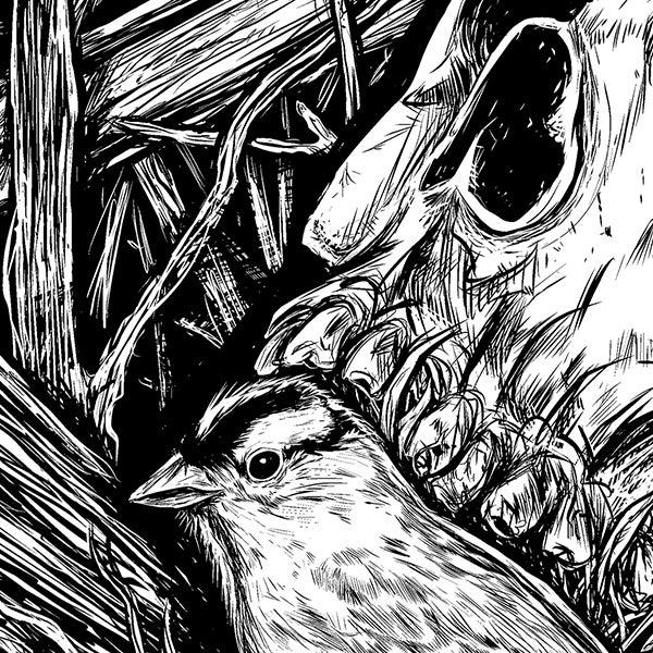 Image of BIRDS & BONES PRINT