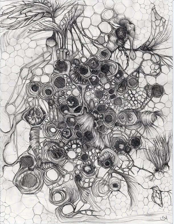 Image of Honeycomb - sketch - 2015