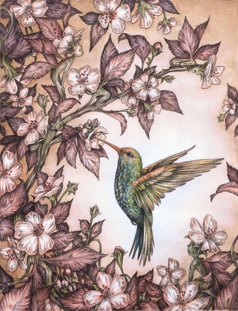 Image of 'Hummingbird' by Adam Oehlers