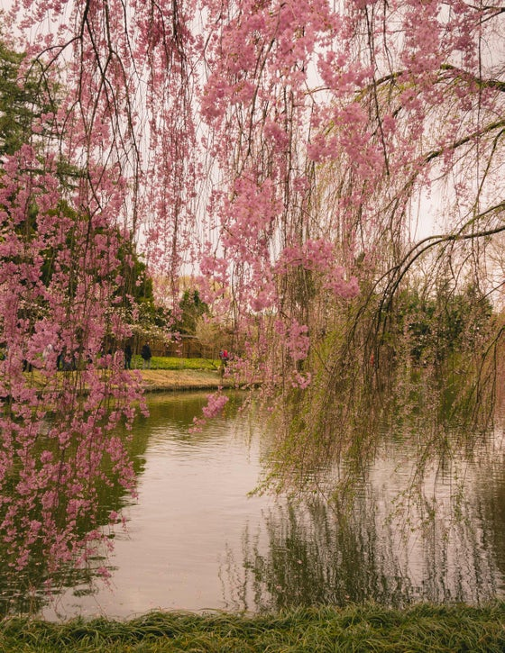 Image of Spring in the botanical garden