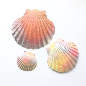 Image of Spirit Shells - Tropical Tones SOLD OUT