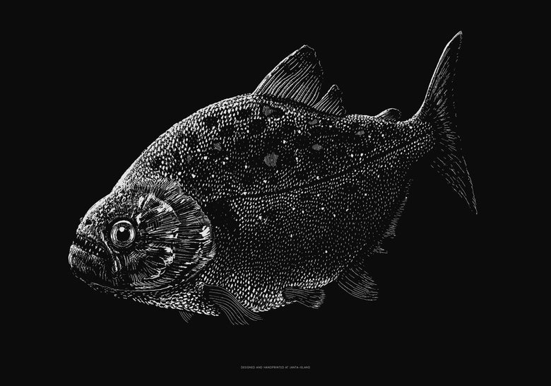 Image of »Piranha« Artprint