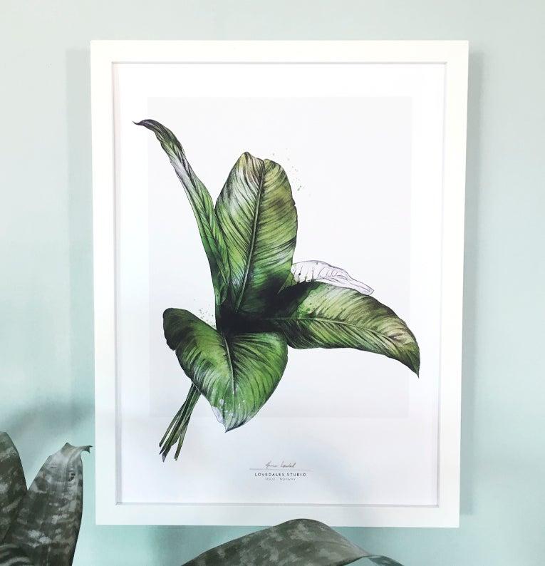 "Image of ""Tropicals 2"""