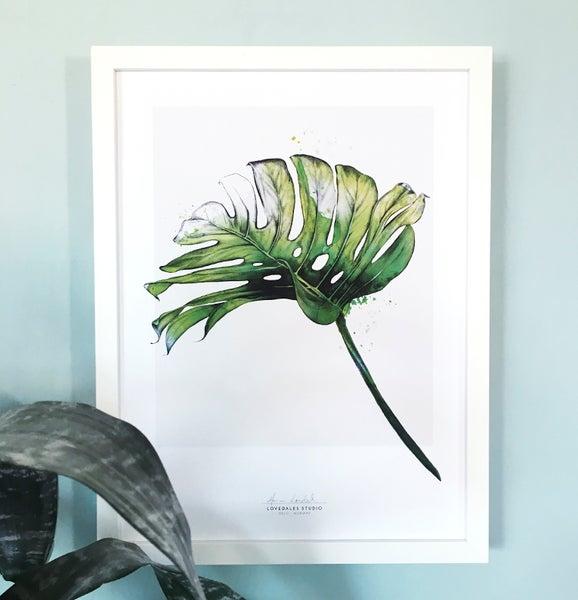 "Image of ""Tropicals 1"""