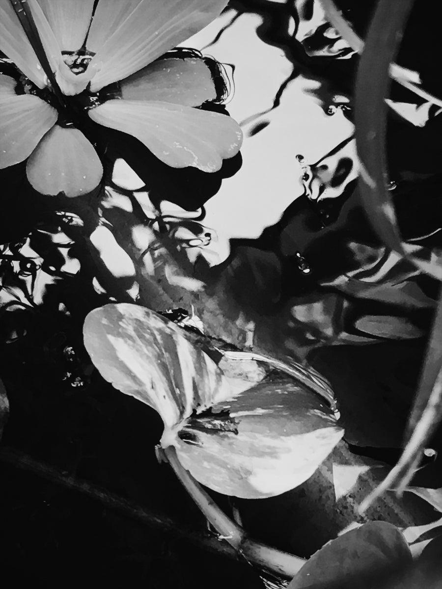 Image of Botanical Study No. 1