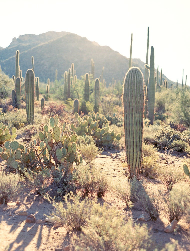 Image of Cactus #3