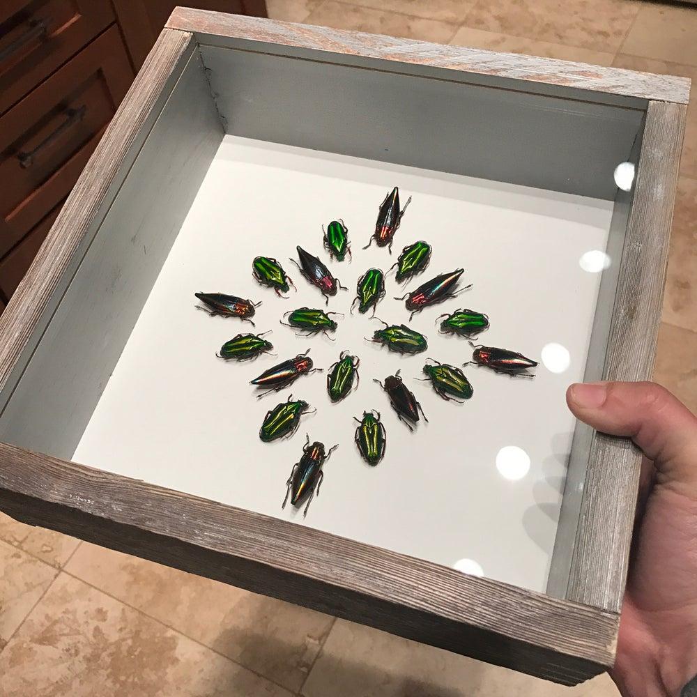 Image of Beetle Mandala