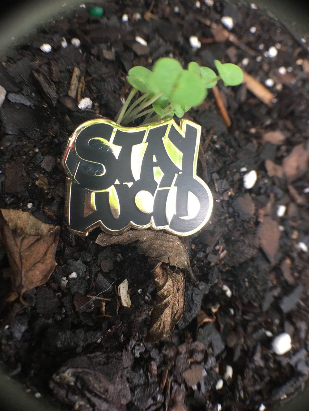 "Image of ""STAY LUCiD"" Pin"