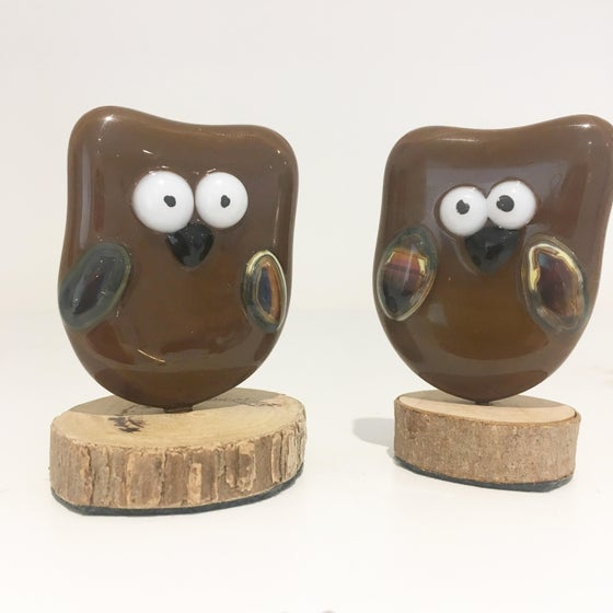 Image of Wise old owls