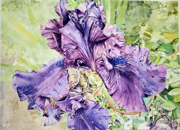 Image of Royal Iris
