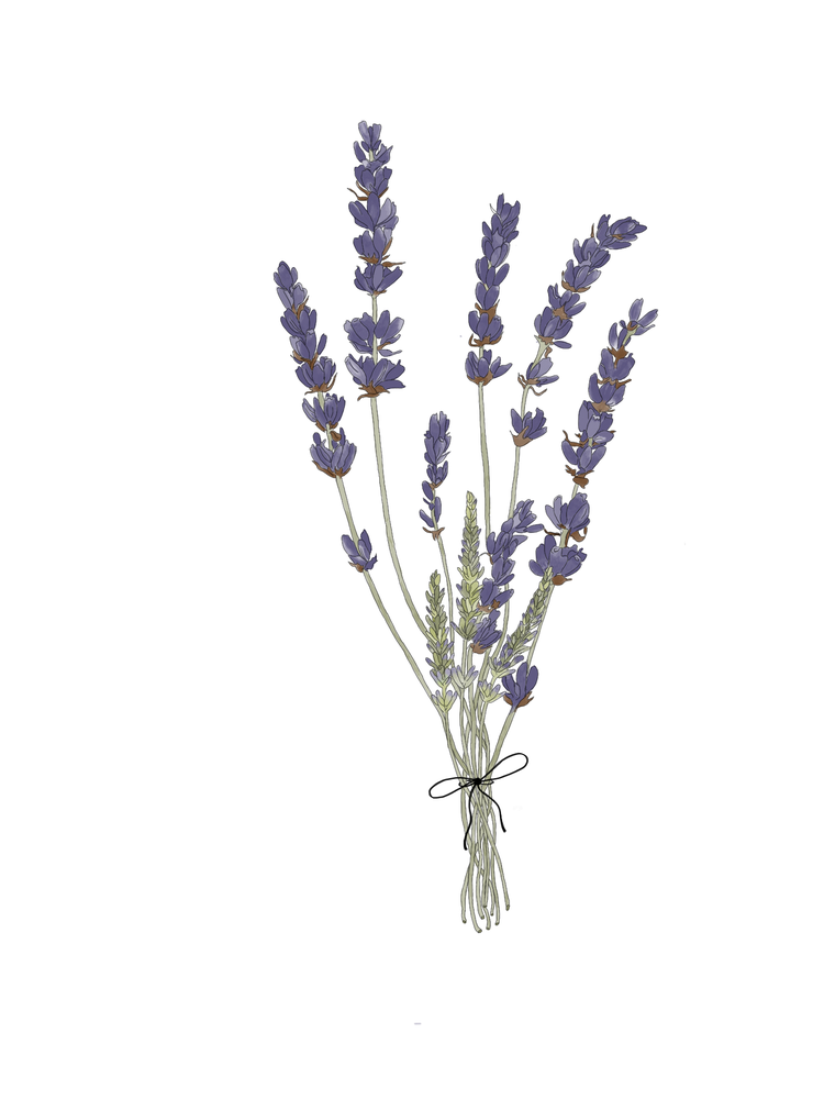 Image of Lavender Sprig Sticker