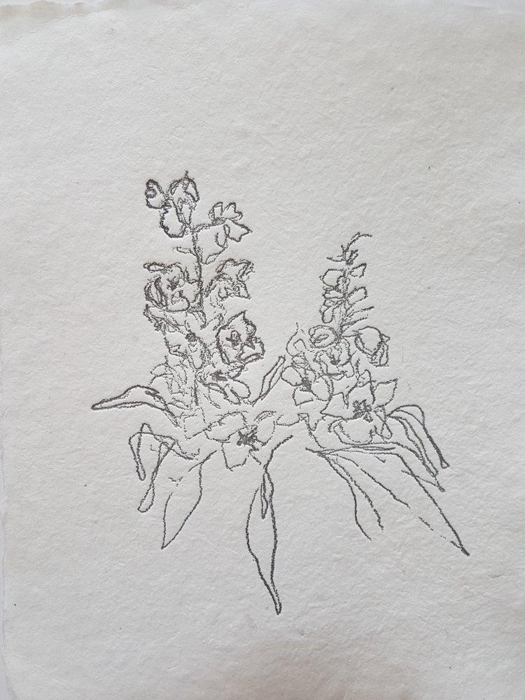 Image of delphiniums
