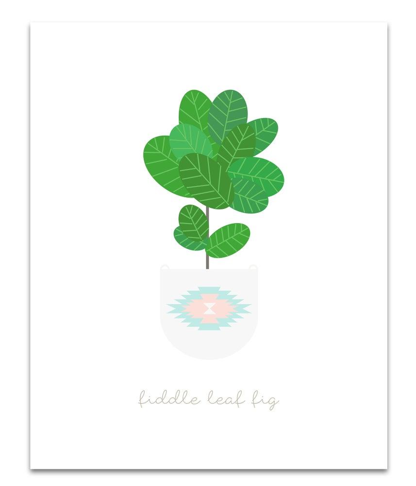 Image of Fiddle Leaf Fig Aztec