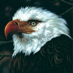 Image of MOGWAI the hawk is howling 2xLP