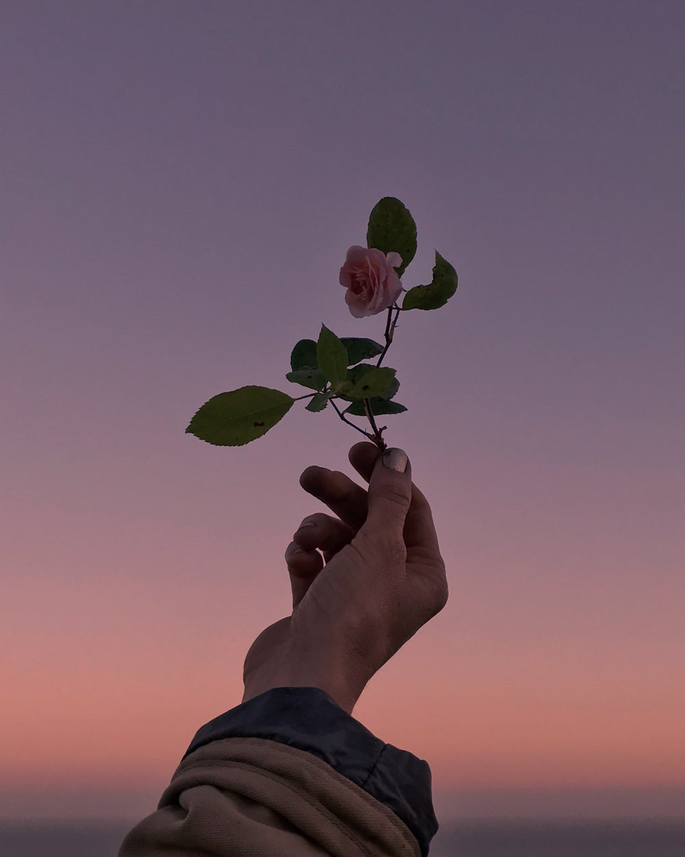 Image of Rose and Sunset