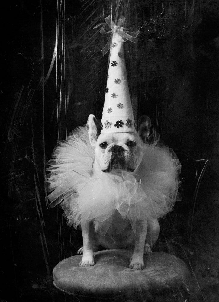 Image of Happy Birthday French Bulldog