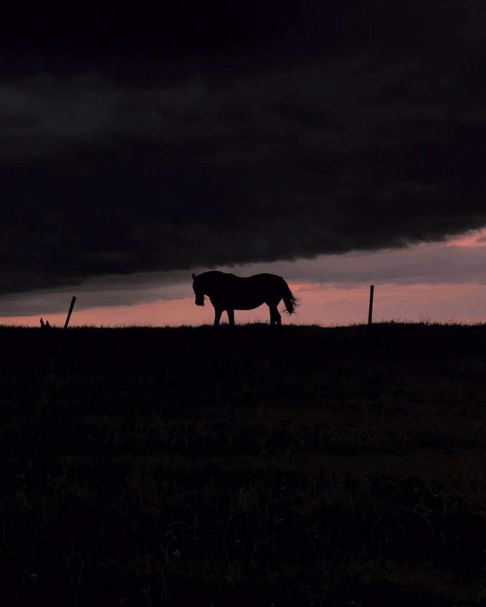 Image of Horse Silhouette