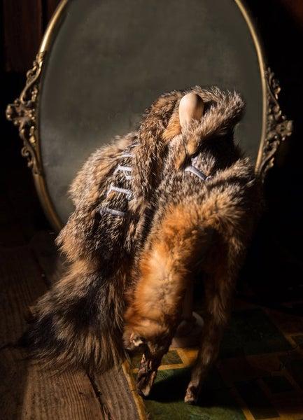 Image of châle de renard rouge