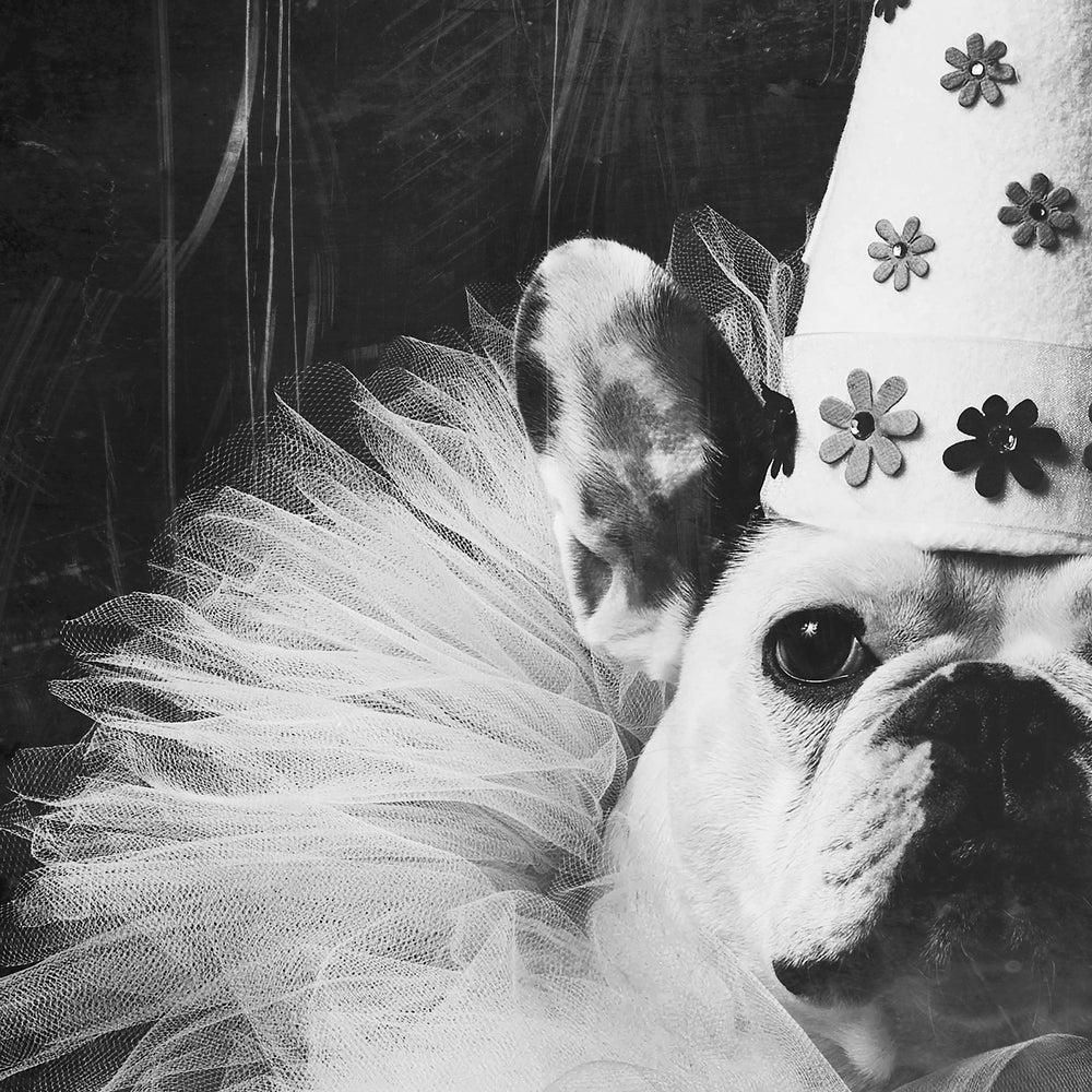 Image of Happy Birthday French Bulldog II