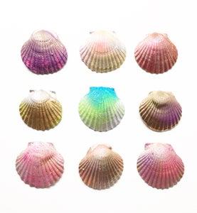 Image of Mini Spirit Shells