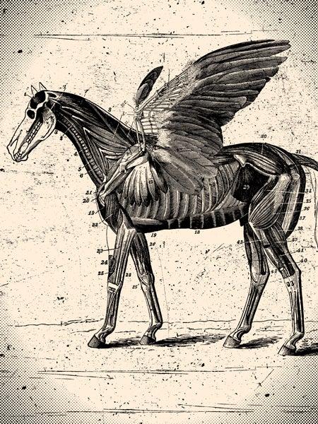 Image of Anatomical Pegasus