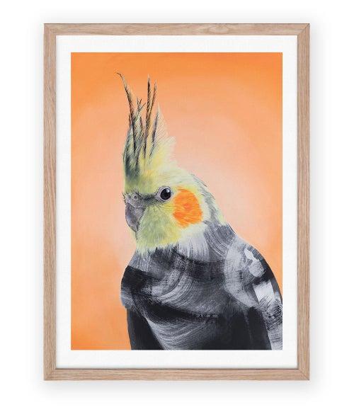 Image of Cockatiel