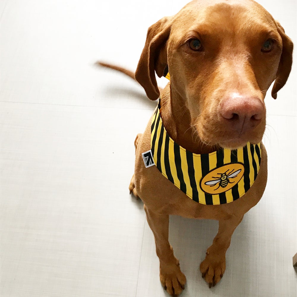Image of Manchester Bee Dog Bandana by Misheleneous