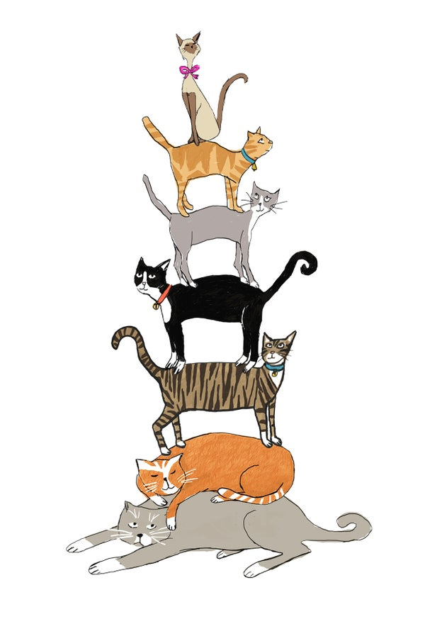 Image of Cat Stack