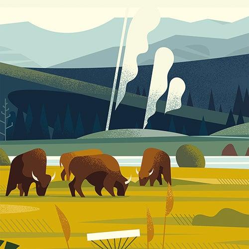 Image of YELLOWSTONE - Herd of buffalo