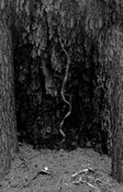 Image of 088 - One Master/Ninhursag split