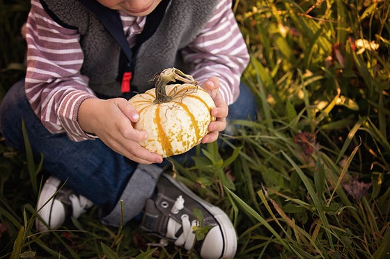 Image of Fall Mini-Sessions