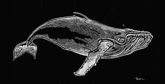 Image of SPECIAL HUMPBACK WHALE TSHIRT AND HOODIE OFFER