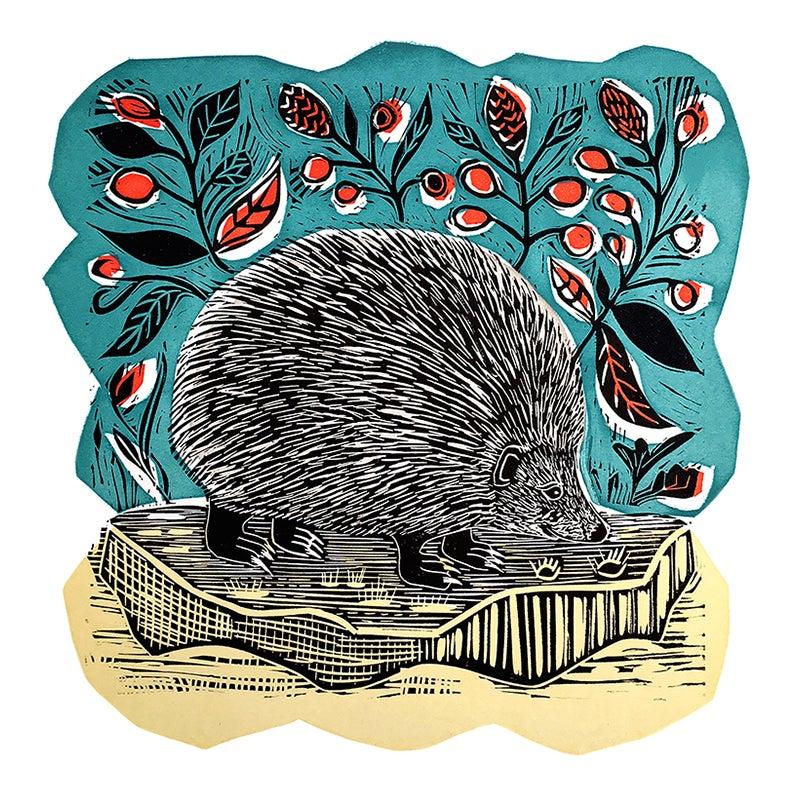 Image of Hedgehog
