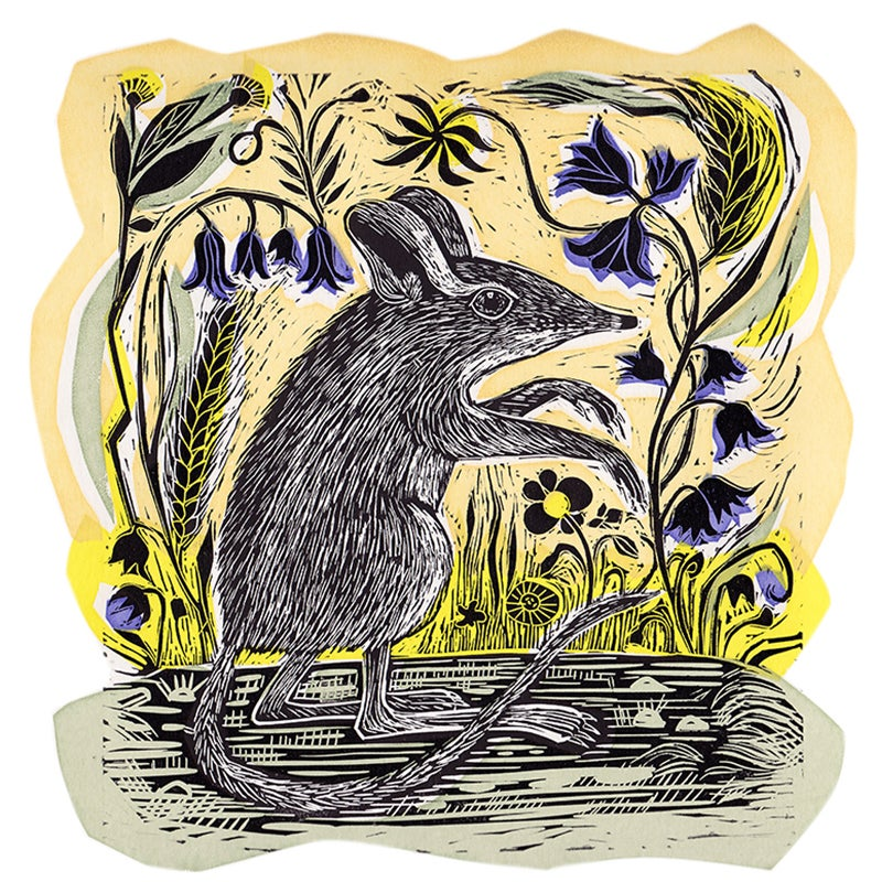 Image of Ratty and the bluebells